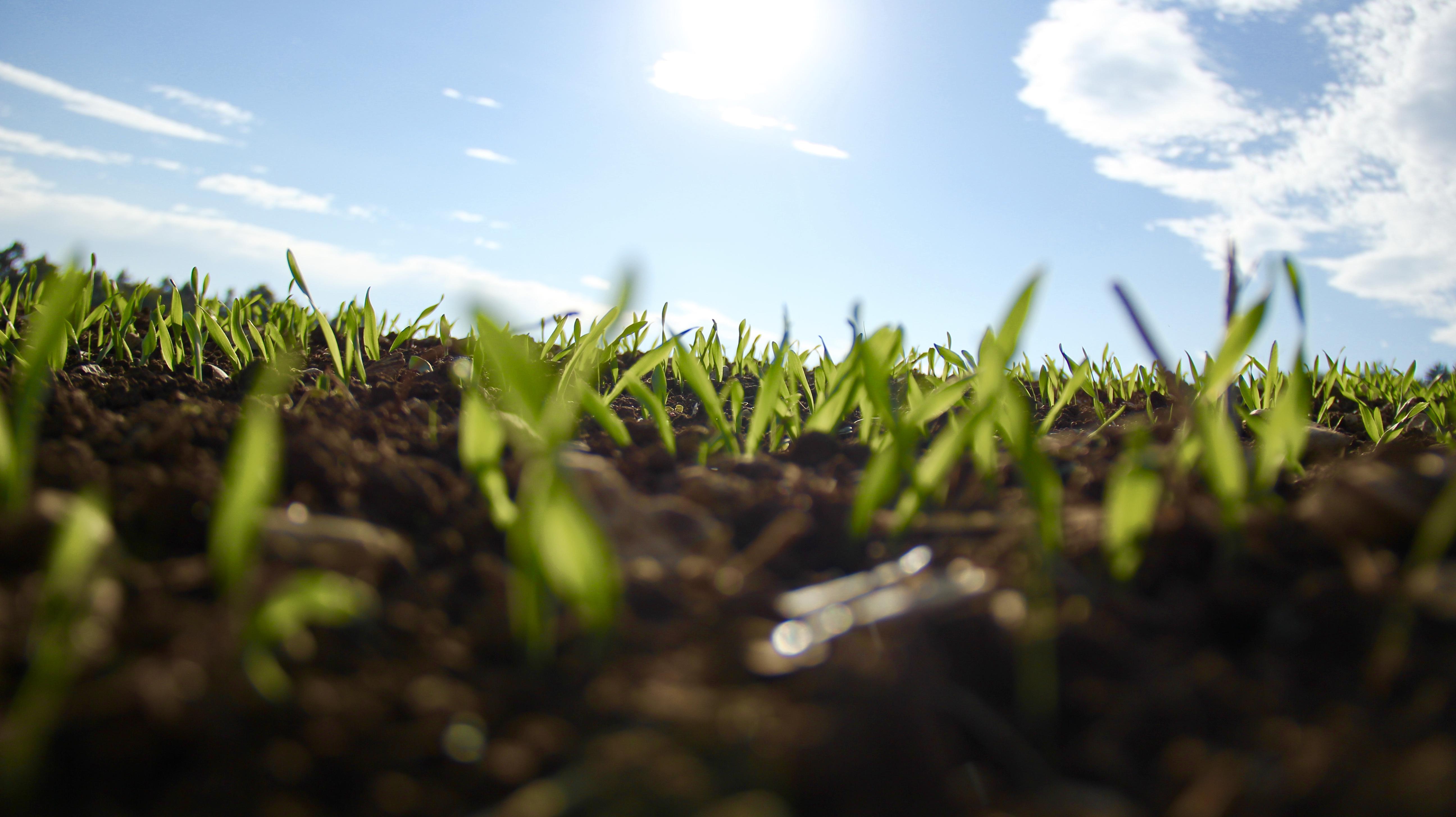 Hierba creciendo